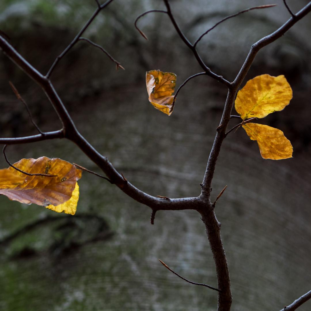leaving leafs