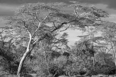 Kenia-118-PA170950